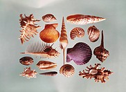 Various sea shells on grey background