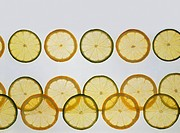 Slices of lemon and lime on white background, close_up