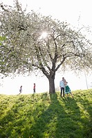 Family playing under tree outdoors