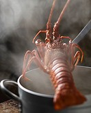 Cooking a Royal spiny lobster from Brittany