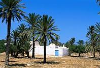 Menzel Cottage, Djerba Island, Tunisia