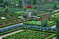 Symmetrical topiary gardens of Chateau de Villandry, located in France´s Loire Valley.