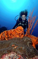 Scuba diver in Paupa New Guinea swims above coral reef with clownfish and orange sponge in the foreground.
