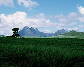 Volcanic peaks rise above the lush island landscape of Mauritius.