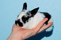black white baby bunny