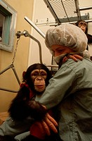 A nurse at the New York University lab in Suffern, New York, holds a young chimp patient. Another chimp plays in the background.