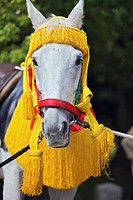 A head shot of a horse in the Jidai Matsuri
