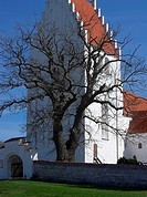 Barren Old Tree in Front of White Church