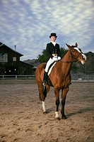 Equestrian Riding Dressage Horse