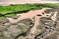green coastline