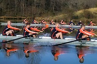 Rowing Crews