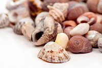 Shells in macro