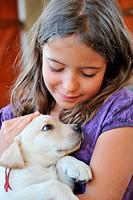 puppy labrador retriever and little girl