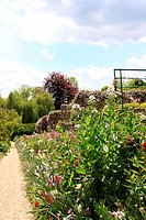flower garden in spring