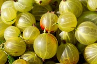 Gooseberries.