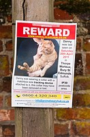 A reward notice for a missing cat by animal search UK in Lavenham , Suffolk , England , Britain , Uk