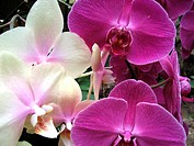 Exotic Flower Mixture