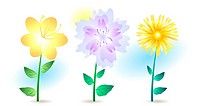 Vector illustration of three summer flowers isolated on white