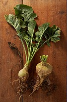 Turnips with and without leaves