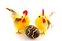 easter chicken with chocolate egg