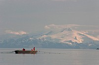 Fishermen check their gillnet for salmon from their picking skiff in Shelikof Strait, Alaska Peninsula in the background, Kodiak Island, Southwest Ala...