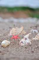 Sea stars and shells