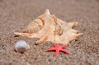 Sea stars and shells at the beach