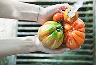 Italy, Tuscany, Magliano, Close up of woman´s hand washing tomatoes under water