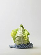 Pointed cabbage on white background