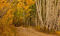 Autumn color along a rural road in the San Juan Mountains of Colorado
