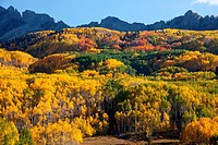 Fall, Kebler Pass, Colorado