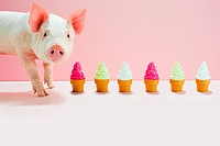 Piglet next to row of toy ice cream cones, studio shot (thumbnail)