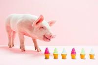 Piglet next to row of toy ice cream cones, studio shot