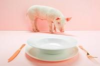 Piglet near empty plate in pink studio