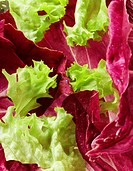 Lettuce close_up 3