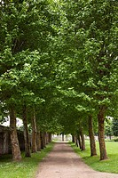 Path lined by large trees on either side