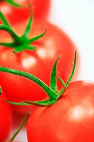 Vine tomatoes, close_up