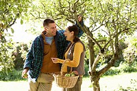 Couple picking apples in garden