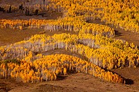 Fall color near Crested Butte, Colorado