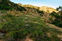 Spring scene from Karandila
