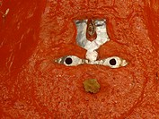 Orange idol
