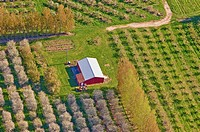 Aerial view, spring-time orchards, Mason county, Michigan, USA
