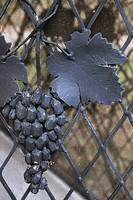Gray iron leaf and grapes at fence