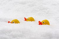 rubber ducks in deep artificial snow