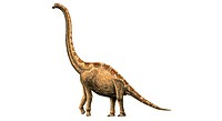 Giraffatitan brancai. This dinosaur lived in Tanzania between the Kimmeridgian to Tithonian stages of the late Jurassic.