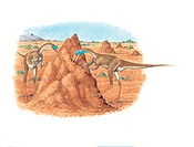 Mononykus olecranus dinosaurs feeding. This dinosaur lived in Mongolia during the Campanian stage of the late cretaceous period.