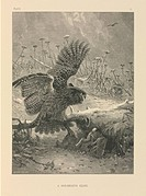 Bird_of_prey hunting, 19th century. This artwork is titled ´A Hair_Breadth Escape´ It is from ´The Life and Habits of Wild Animals´ 1874, illustrated ...