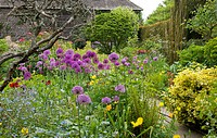 Mixed Summer border with Allium sp.