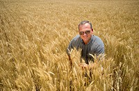 Grain Producer inspecting wheat crop in the field, Talbot County Maryland USA