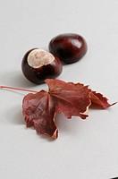 Autumn, fall, symbol, chestnut, leaf, foliage, brown